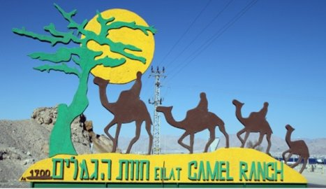 Camel riding and cheese tasting